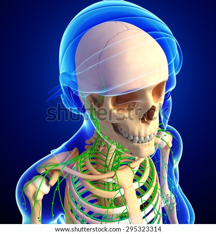 Illustration of Female skeleton with lymphatic system