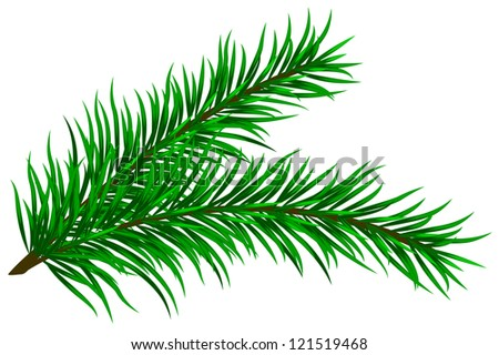 illustration of fir branches