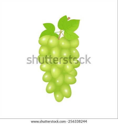 Illustration of green grapes branch. Raster version - stock photo