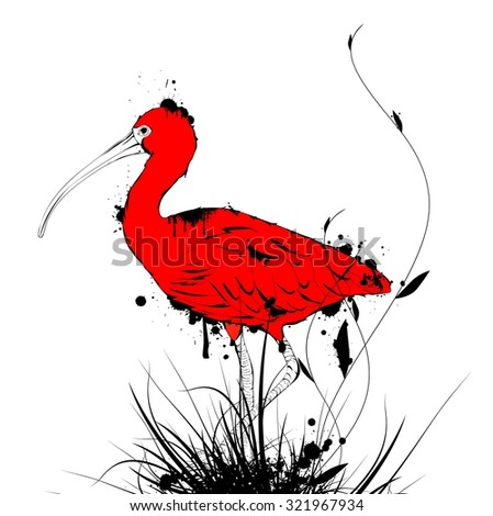 Illustration of Grunge Vintage Designed Eudocimus ruber or Red Ibis Over White Background - stock photo