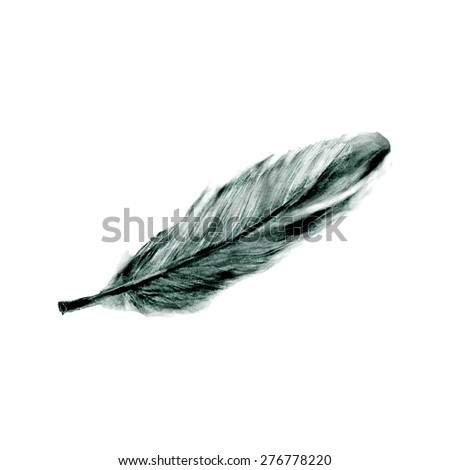 Illustration of hand drawn feather isolated on white background - stock photo