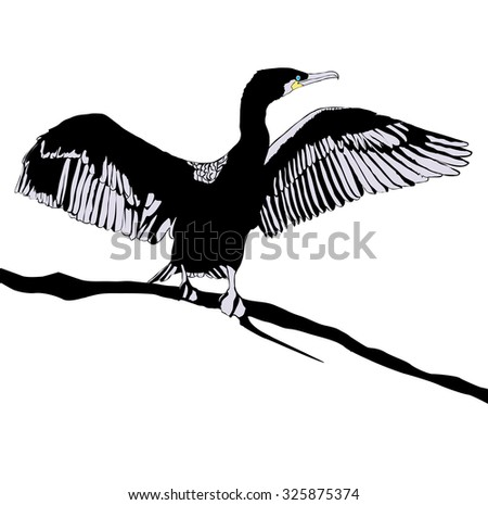 Illustration of Hop off Cormorant Over White Background - stock photo
