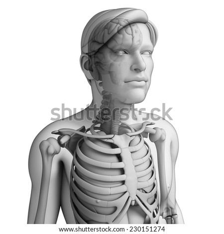 Illustration of human body respiratory system  - stock photo