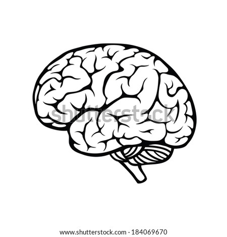 Illustration of human brain on white background - stock photo