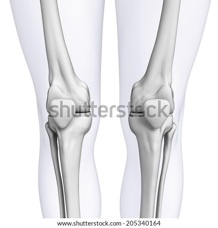 Illustration of human knee artwork - stock photo