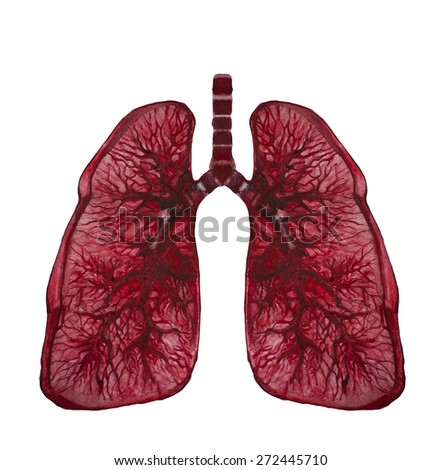 Illustration of lungs - stock photo