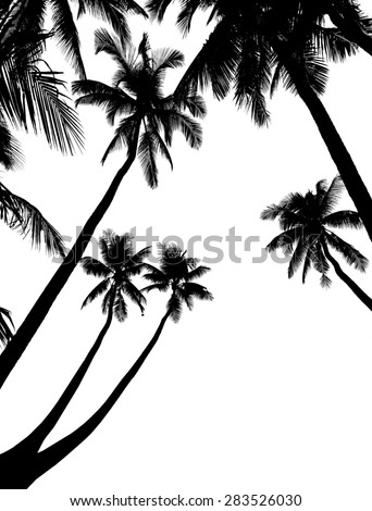 Illustration of palm tree silhouettes, isolated on white