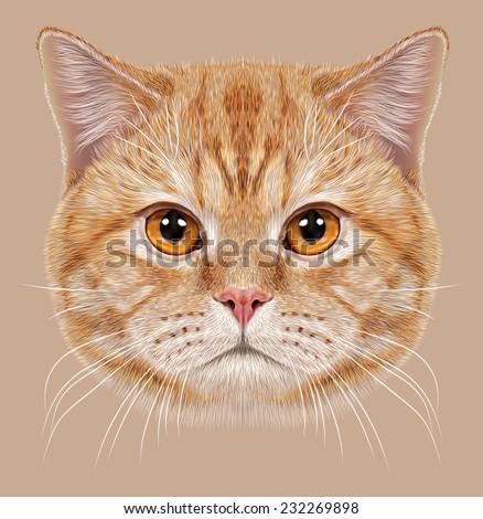 Illustration of Portrait British short hair Cat. Cute orange Domestic cat with copper eyes. - stock photo