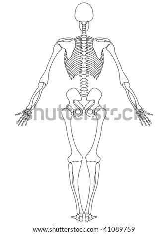 illustration of rear view of male skeleton