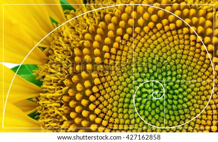 Illustration of spiral arrangement in nature. Fibonacci pattern - stock photo