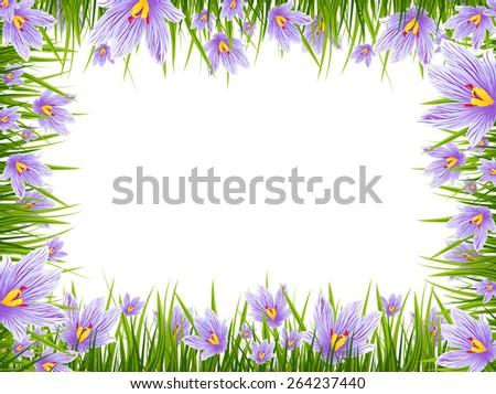 Illustration of Spring Purple Crocus Border, Copyspace - stock photo