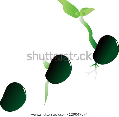 illustration of stages of growth of plant - stock photo
