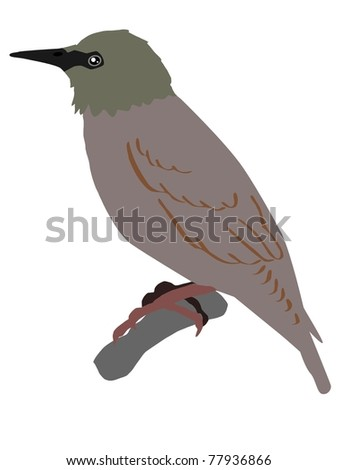 Illustration of starling - stock photo