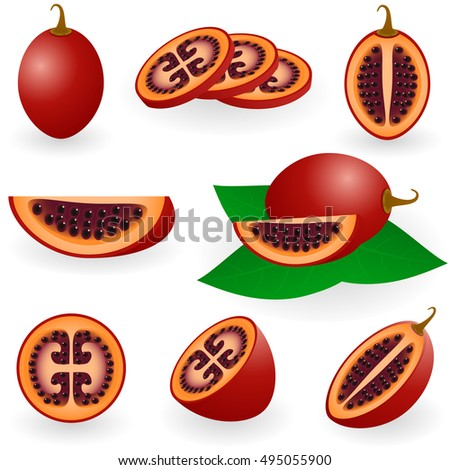 Illustration of tamarillo fruit or tree tomato with slices isolated on white background