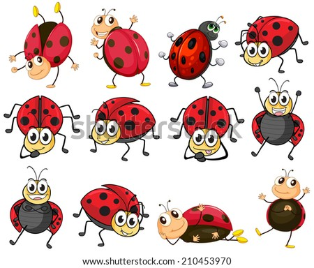 Illustration of the cute ladybugs on a white background - stock photo