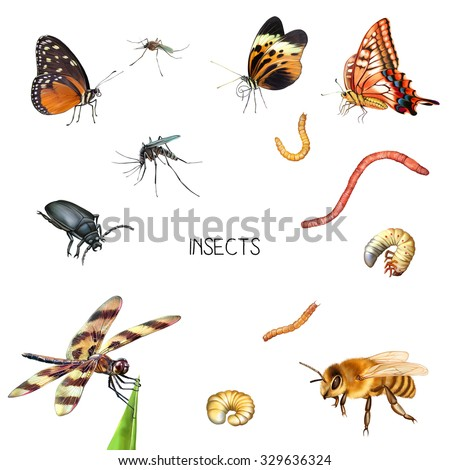 Illustration of the Insects: Cute bee, young red and yellow butterfly, dragonfly, little black beetle or bug, mosquitoes isolated on white background - stock photo