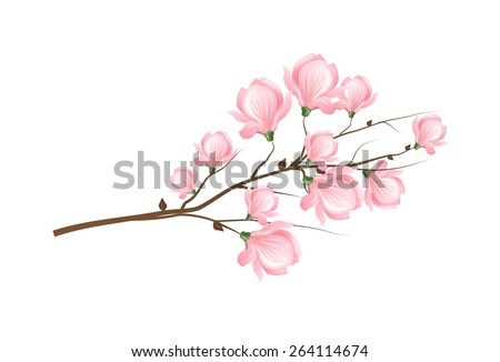 Illustration of twig of tree with light pink blossom of magnolia