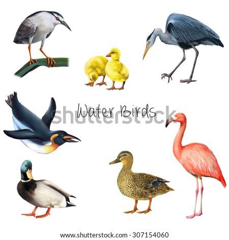 Illustration OF WATER BIRDS: PENGUIN, crane bird, heron, egret, duck, mallard duck male and female, flamingo, duckling. Isolated on white background. - stock photo