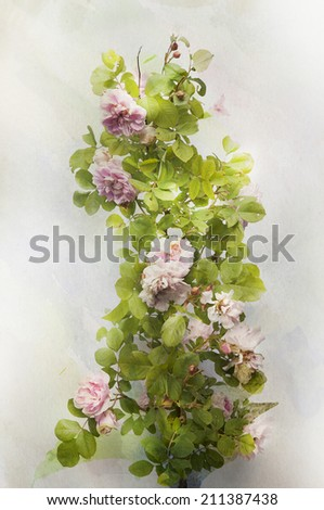 Illustration of watercolor climbing rose on a vintage background  - stock photo