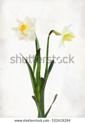Illustration of watercolor daffodil on a vintage background - stock photo