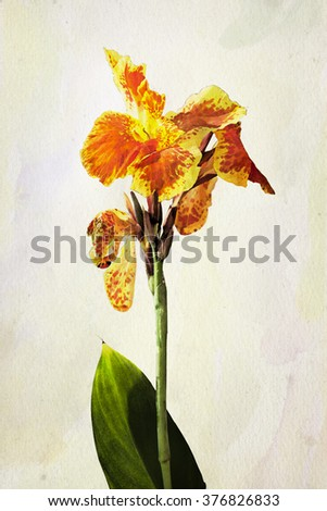 Illustration of watercolor Iris flower. Artistic watercolor painting style with texture