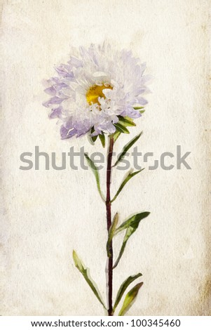 Illustration of watercolor lilac aster on a vintage background - stock photo