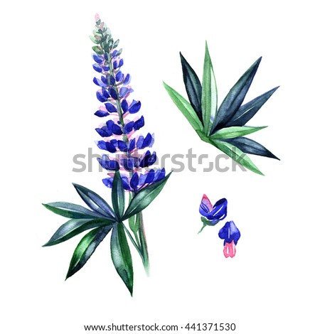 Illustration of watercolor lupine in a grass - stock photo
