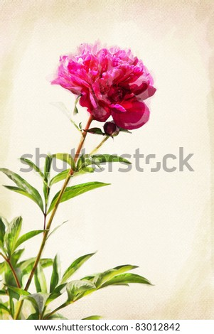 Illustration of watercolor red peony on a vintage background - stock photo