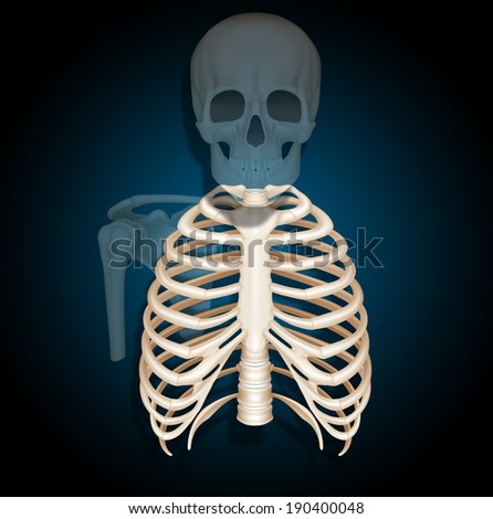 illustration ribcage  - stock photo