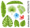 Illustration Set of Tropical Leaves, Collection Plants Isolated on White Background - raster - stock photo