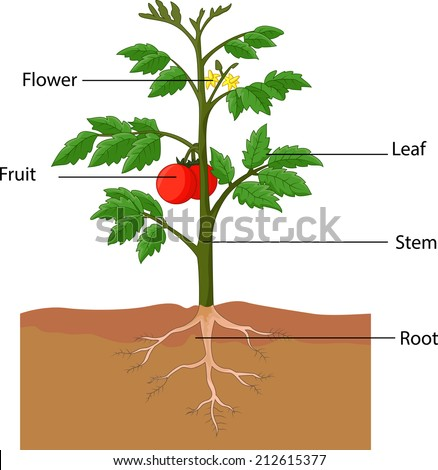 Plant Part Stock Images, Royalty-Free Images & Vectors | Shutterstock
