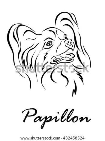 Illustration shows a dog breed Papillon