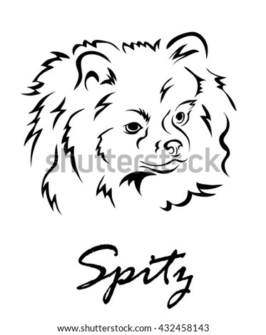 Illustration shows a dog breed Spitz
