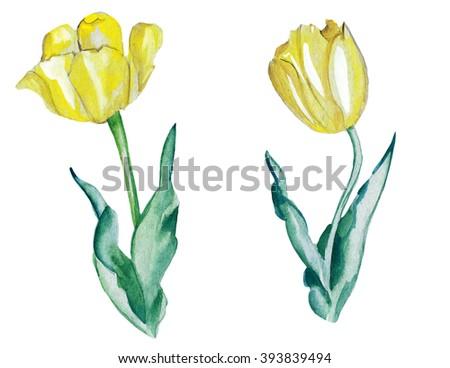 Illustration sketch fresh tulip flower on a stalk yellow - stock photo