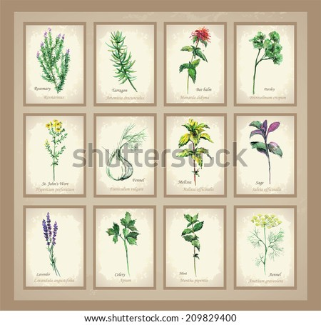 Illustration Spicy and curative herbs. Collection of fresh herbs. Icon.                                        - stock photo