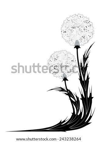 illustration with dandelion for corner design in black and white colors - stock photo