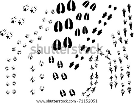 illustration with different animal tracks isolated on white - stock photo
