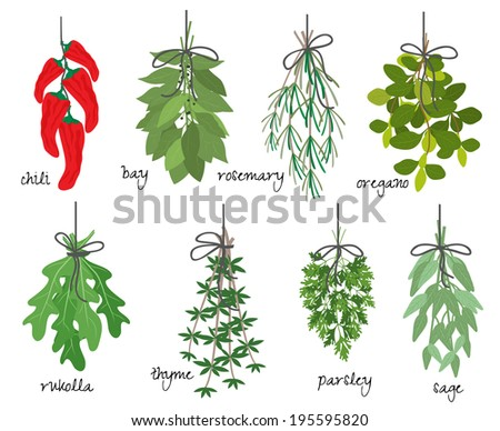 illustration with eight different bunches of medicinal aromatic herbs with fresh red cayenne chilli peppers  bay  rosemary  oregano  rocket  thyme  parsley and sage on white with names - stock photo
