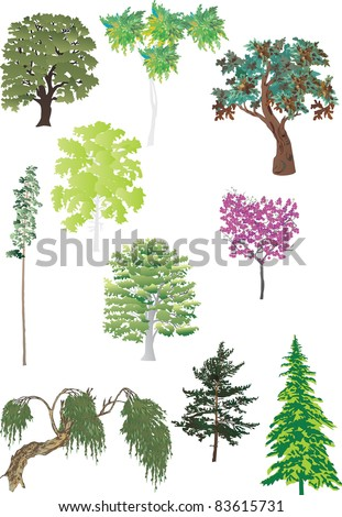 illustration with green trees isolated on white background