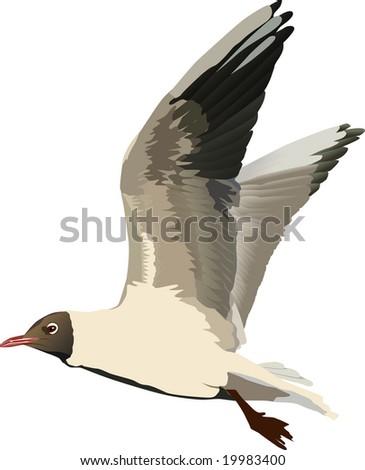 illustration with gull isolated on white background - stock photo