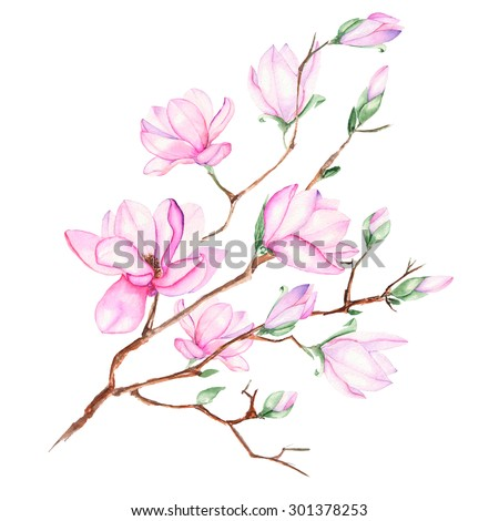 Illustration with magnolia branch with pink flowers painted in watercolor on a white background