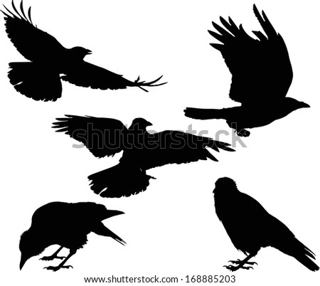 illustration with set of five crow silhouettes isolated on white background