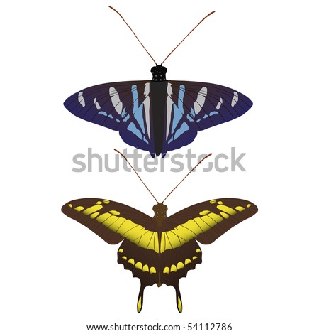 Illustrations of assorted butterflies - stock photo