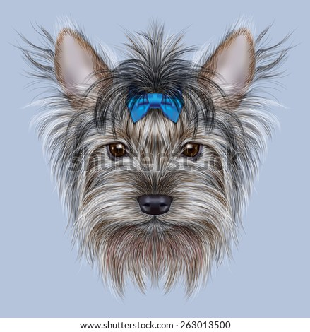 Illustrative Portrait of a Domestic Dog. Cute head of Yorkshire Terrier on blue background. - stock photo