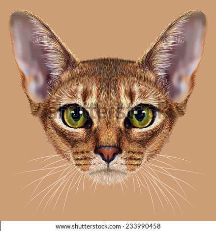 """Illustrative Portrait of Abyssinian Cat. Cute breed of domestic short haired cat with a distinctive rubby """"ticked"""" tabby coat and with green eyes. - stock photo"""
