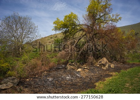 Image and fields and trees after the fire, Prespa, Greece