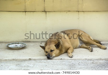 Image Feeling Loneliness Of Sleeping Dog Mongrel Brown Homeless With Empty  Old Plate. On Cement