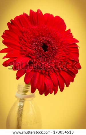 image if a red flower and plastic bottle on yellow background