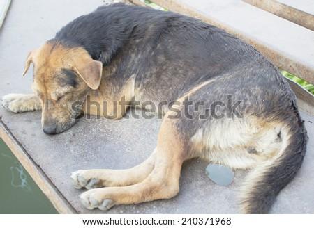 Image is homeless stray dog - stock photo