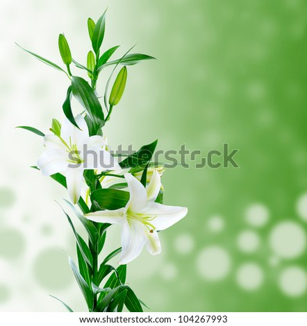 image of a beautiful white lily flowers.